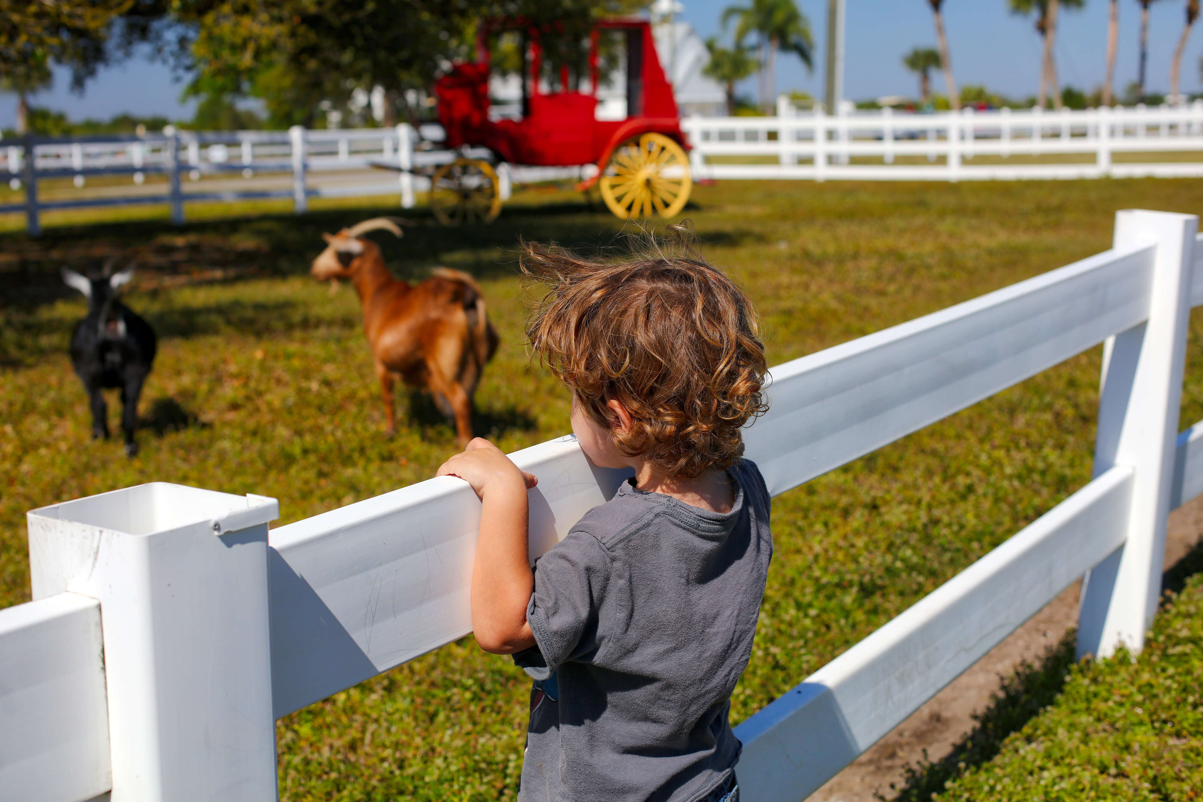Child watching goats at Petting Farm | Westgate River Ranch Resort & Rodeo | Westgate Resorts