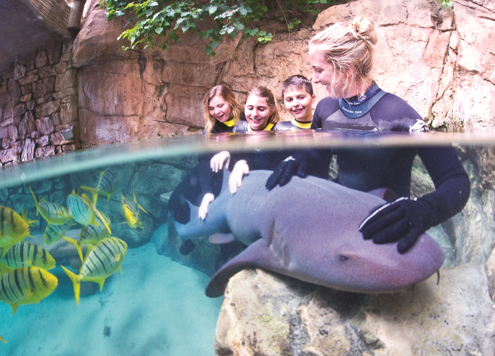 People petting a shark at Sea World Aquarium While on Holiday | The Best Aquariums to Visit on Vacation | Westgate Resorts