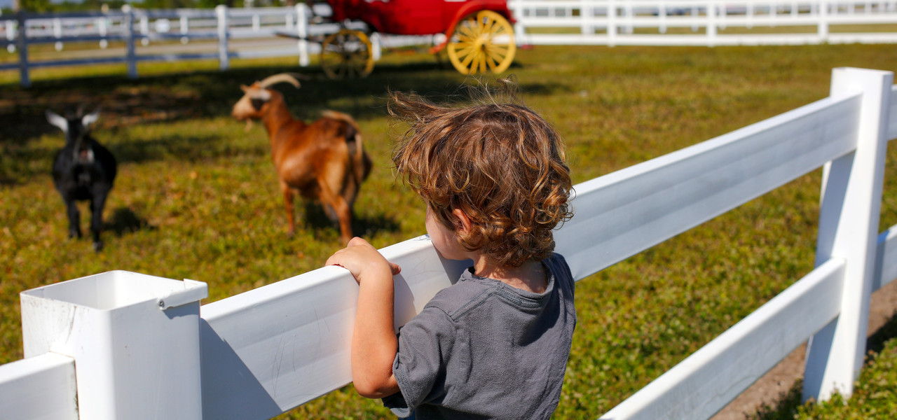 Petting Farm | Westgate River Ranch Resort & Rodeo in River