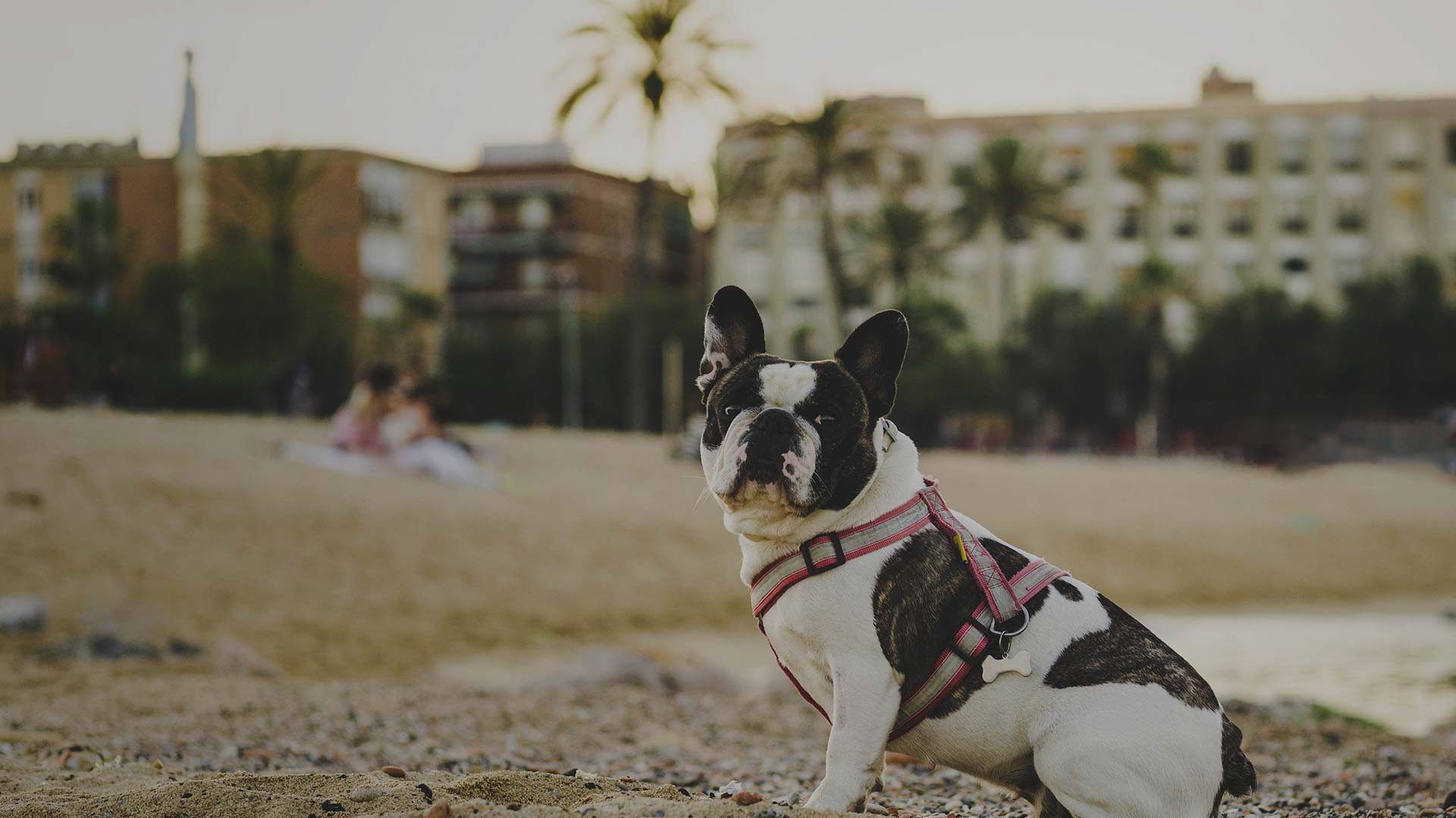 Is Westgate Myrtle Beach Resort pet friendly and is there a cost?