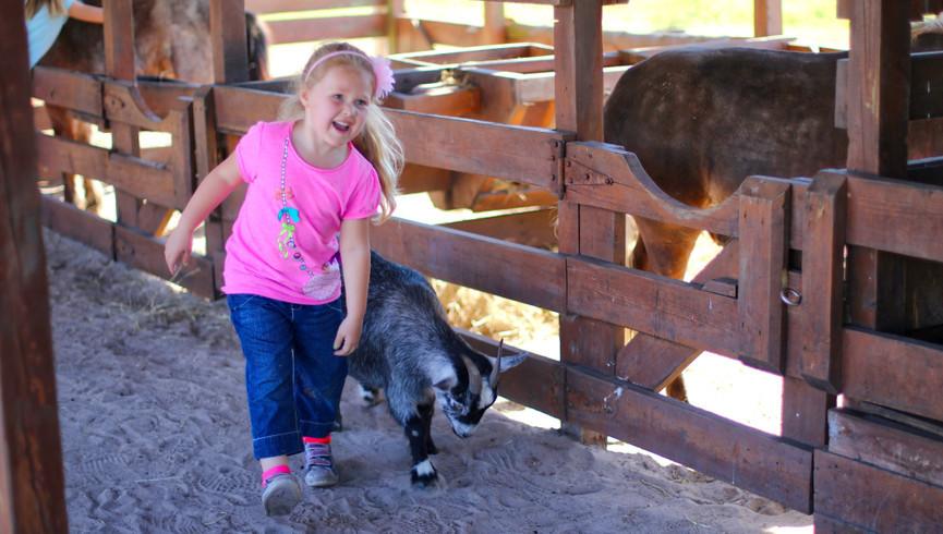 Kids Petting Zoo Near Orlando, FL |  Westgate River Ranch Resort & Rodeo | Westgate Resorts