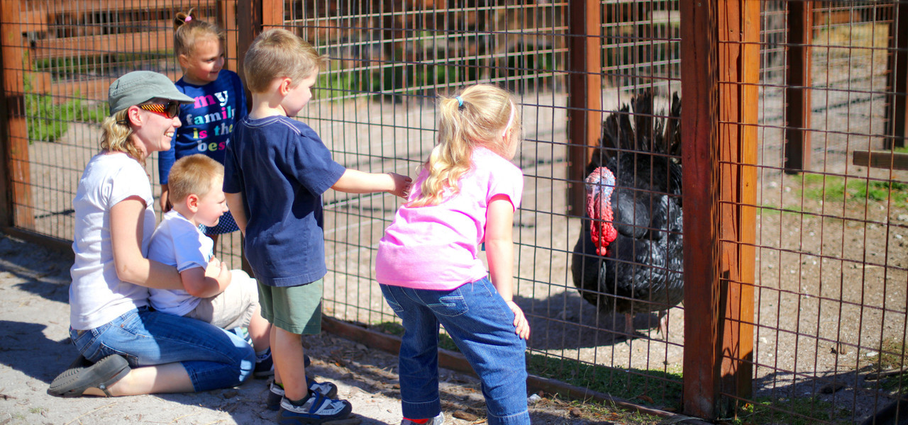 Kids Petting Farm Near Orlando, FL |  Westgate River Ranch Resort & Rodeo | Westgate Resorts