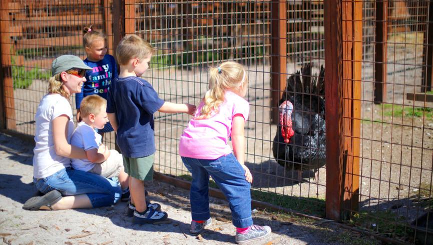 Kids Petting Farm Near Orlando, FL |  Westgate River Ranch Resort & Rodeo | Westgate Resorts