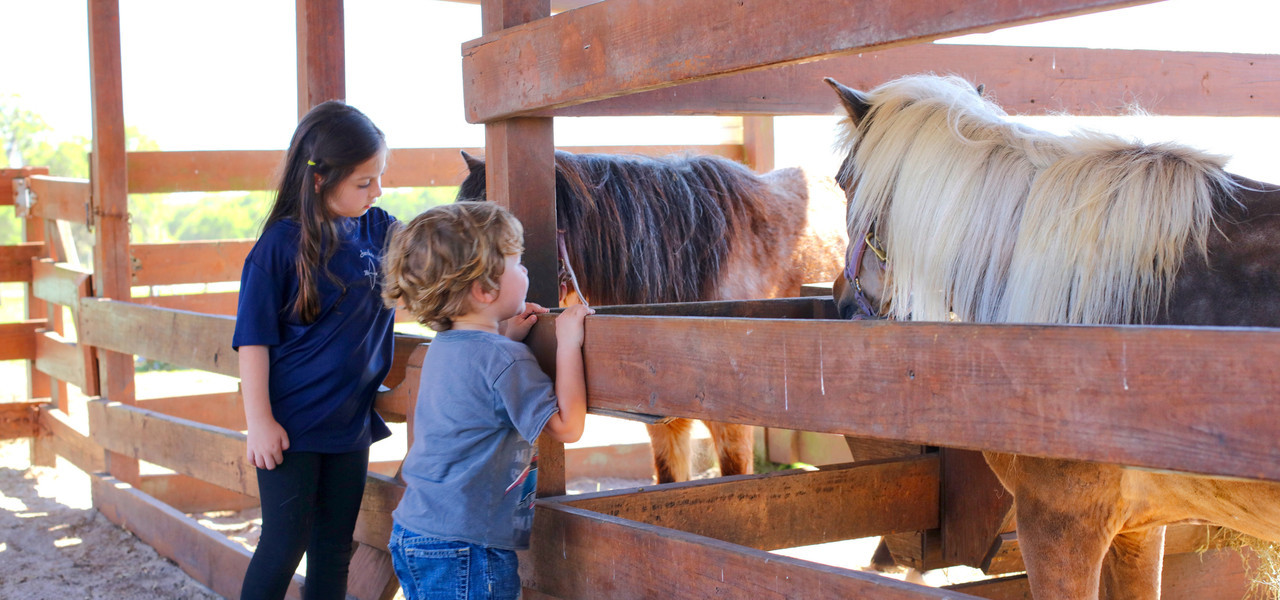 Petting Zoo Near Orlando, FL |  Westgate River Ranch Resort & Rodeo | Westgate Resorts