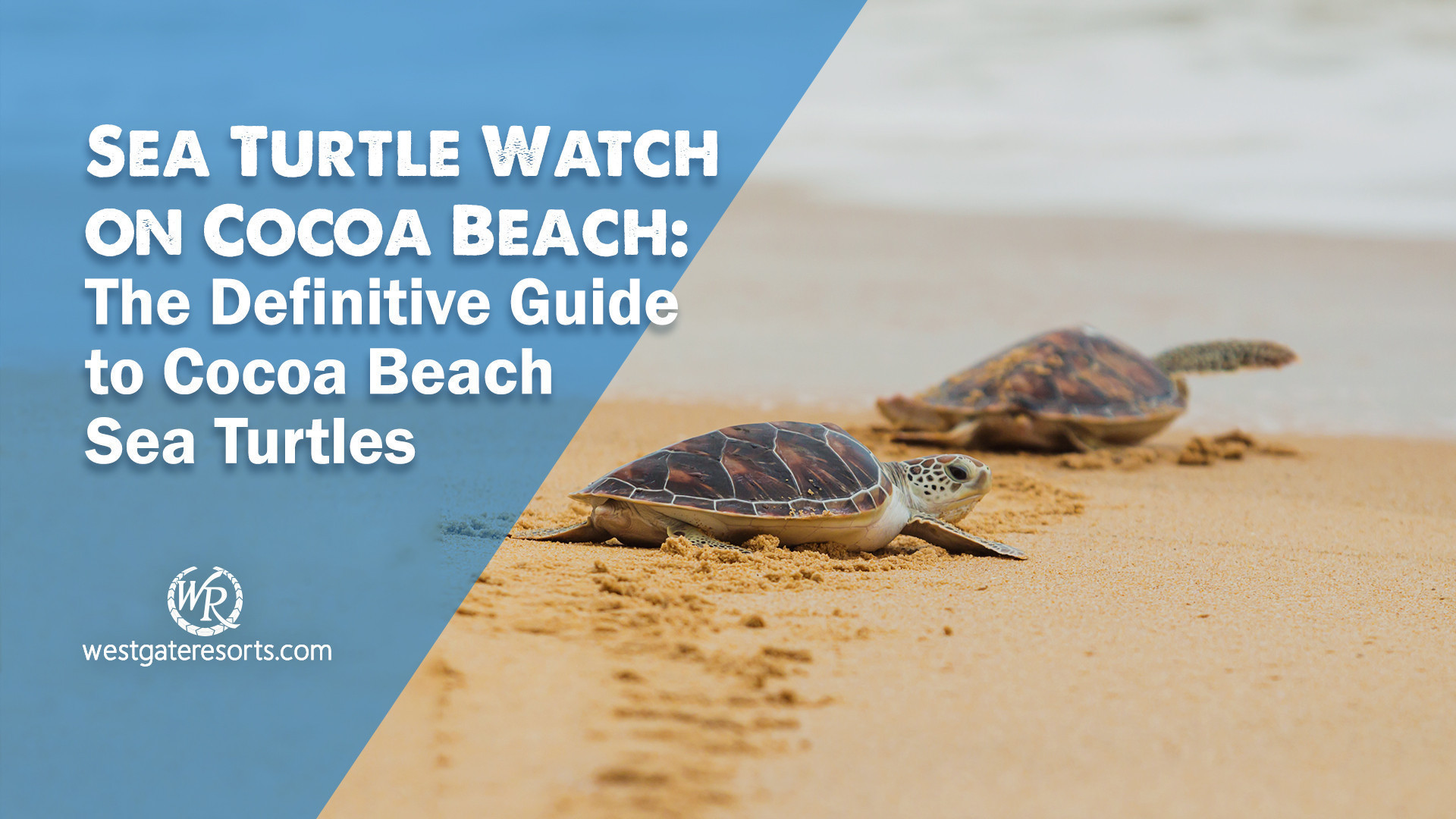 Sea Turtle Watch on Cocoa Beach: The Definitive Guide to Cocoa Beach Sea Turtles