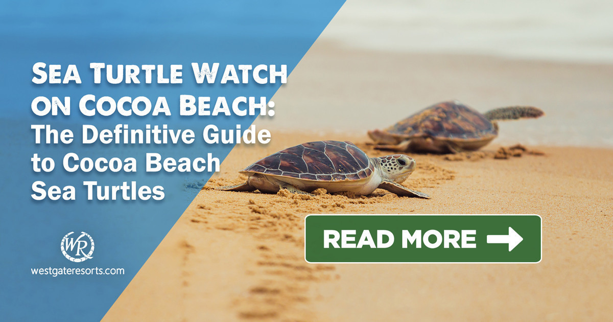 Sea Turtle Watch on Cocoa Beach! | The Definitive Guide to