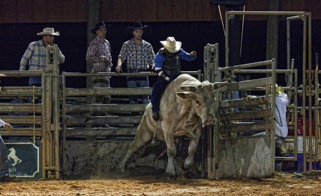 Florida Dude Ranch Resort near Orlando | Saturday Night Rodeo