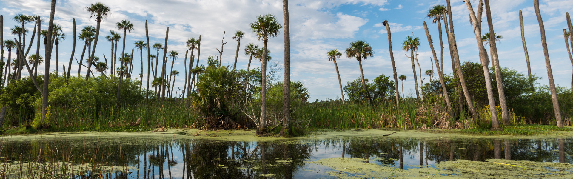 Airboat Rides near Orlando, FL | Kissimmee River during Airboat Tour