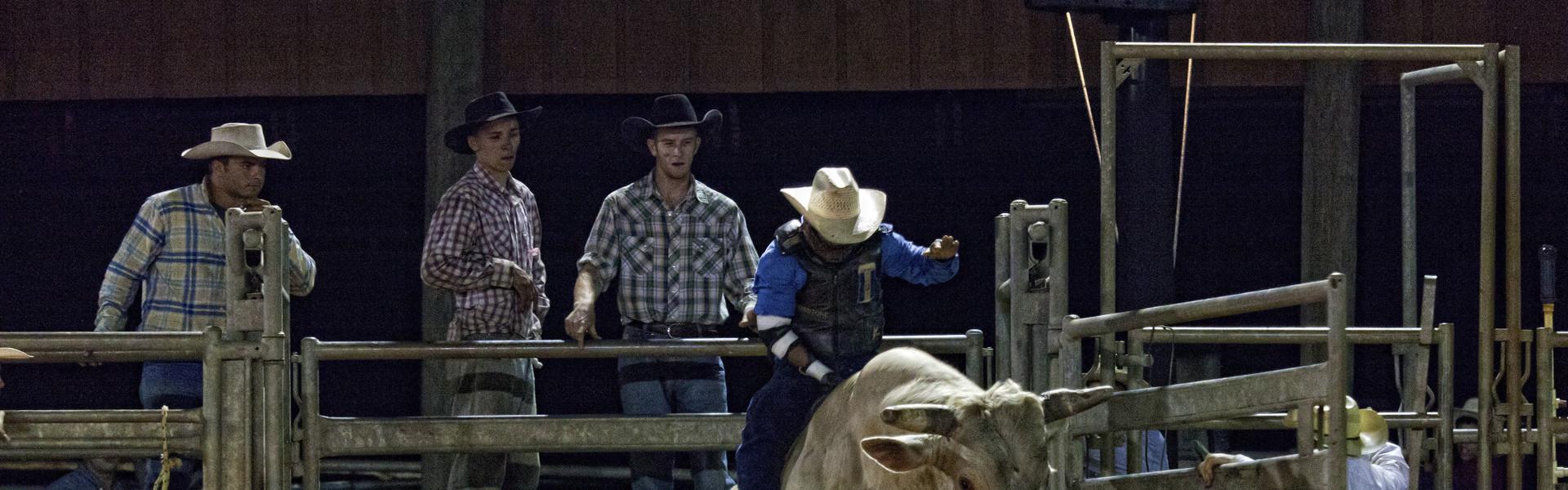 Florida Rodeo near Orlando | Bull Riding at Rodeo