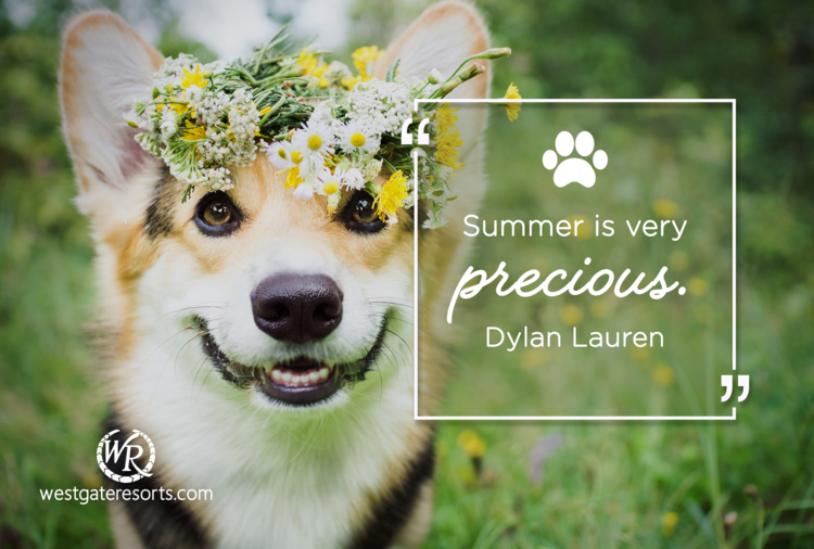 Summer Is Very Precious | Dylan Lauren | Motivational Travel Quotes