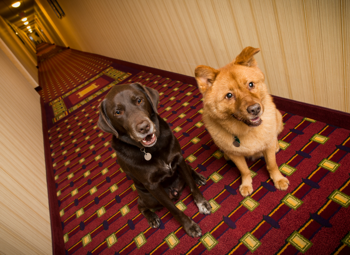 Pet friendly casino hotels las vegas nv invasion 2 flash game