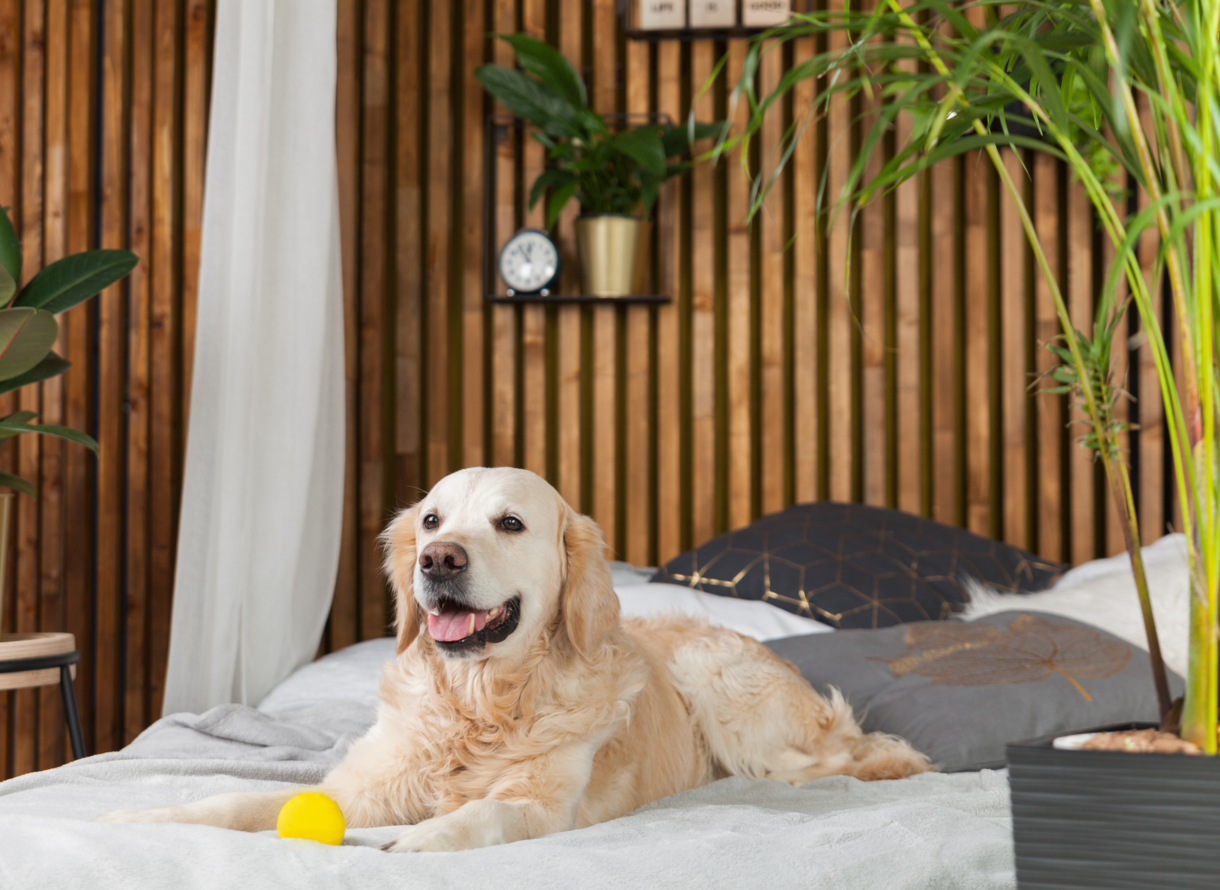 Pet Friendly Hotels In Florida Florida Hotels Westgate Resorts