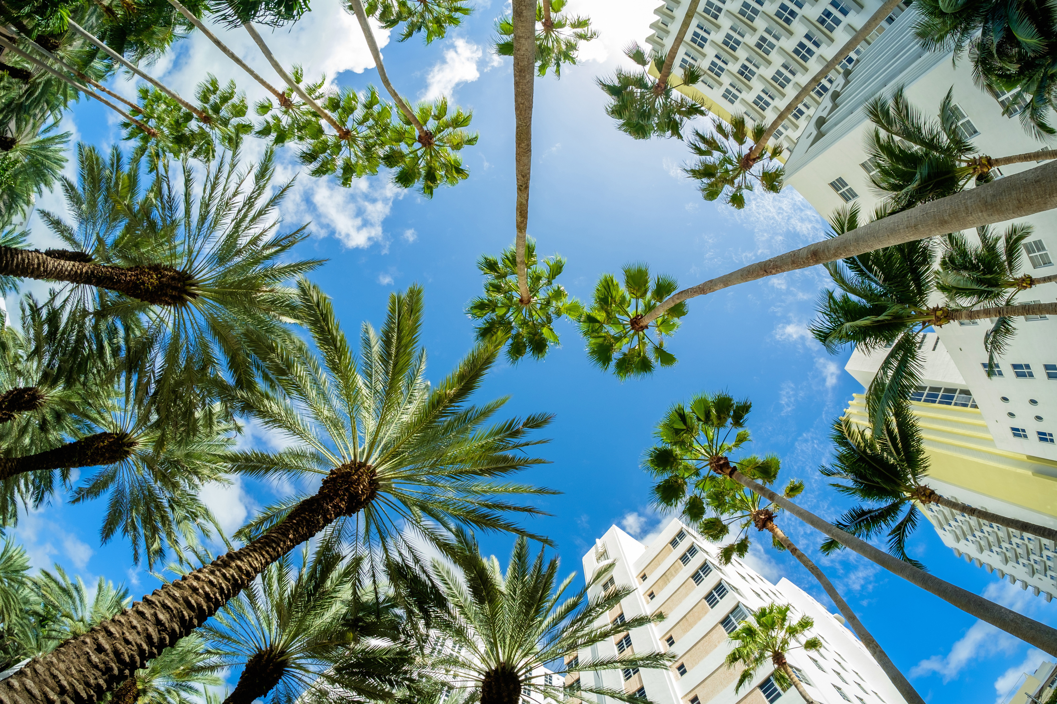 Blue Sky With Palm Trees And Buildings