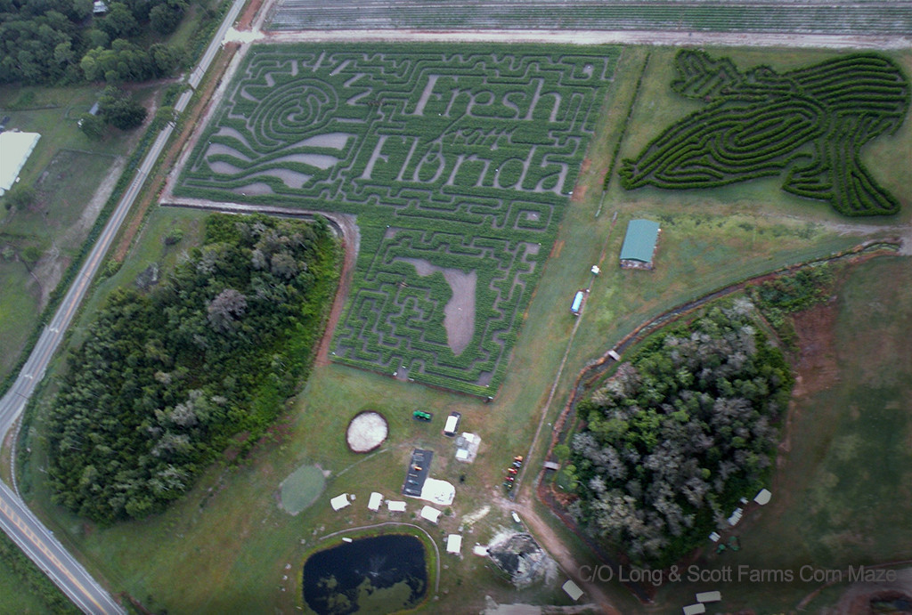 Long & Scott Farms Corn Maze – Mount Dora, FL | Scary Florida Corn Mazes This Halloween | Westgate Resorts