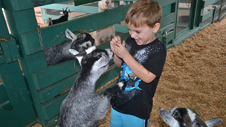 Petting Zoo at Dude Ranch | Best Family Dude Ranch Vacations | 10 Things To Do On Your Family Dude Ranch Vacation