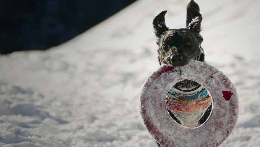 Best Things To Do In Park City Utah In Winter | Dog Sledding Near Our Park City Hotel