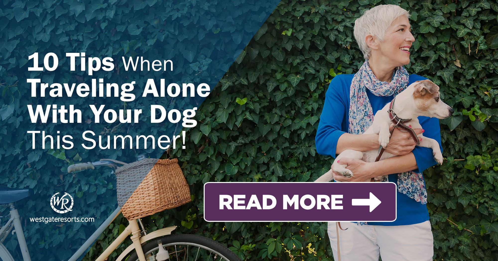 10 Tips When Traveling Alone With Your Dog This Summer | Dog-Friendly Travel Tips