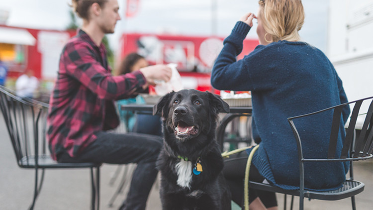 Dog Friendly Travel Tips | Flexible Dog Friendly Eating | 10 Tips When Traveling Alone With Your Dog This Summer!