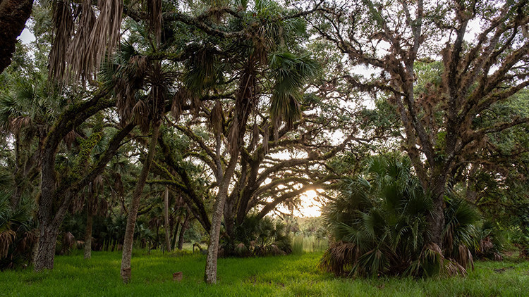 Most Haunted Places In Florida | The Devil's Tree, Oak Hammock Park