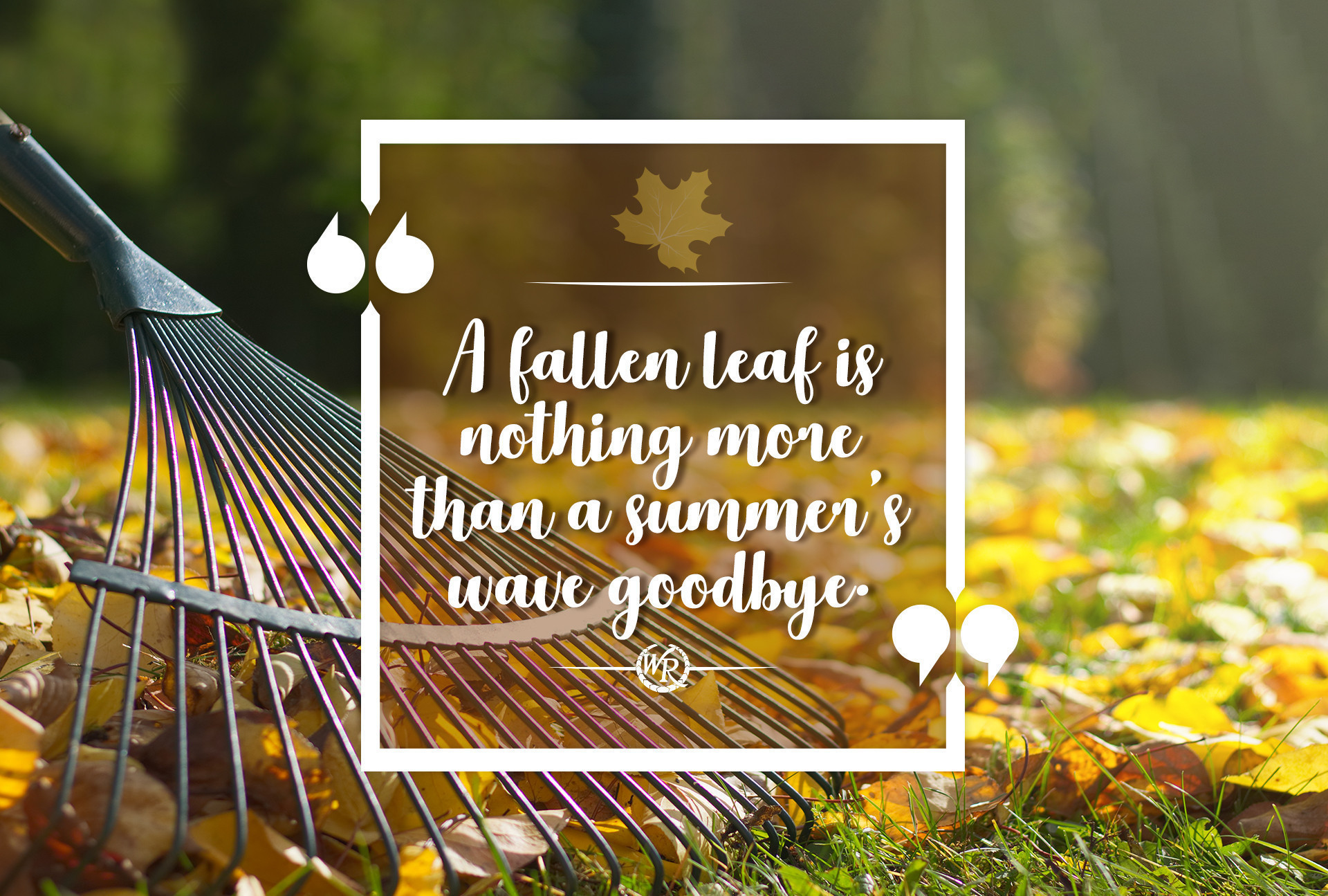 A Fallen Leaf Is Nothing More Than A Summer's Wave Goodbye. | Inspirational Travel Quotes