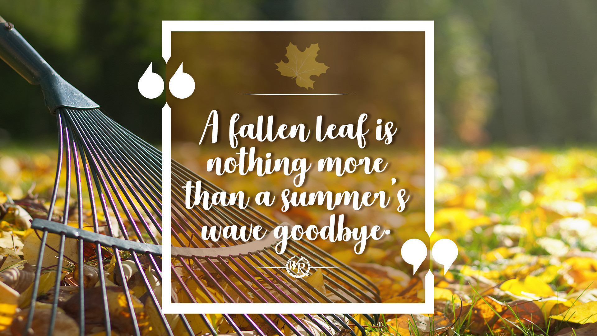 A Fallen Leaf Is Nothing More Than A Summer\'s Wave Goodbye ...