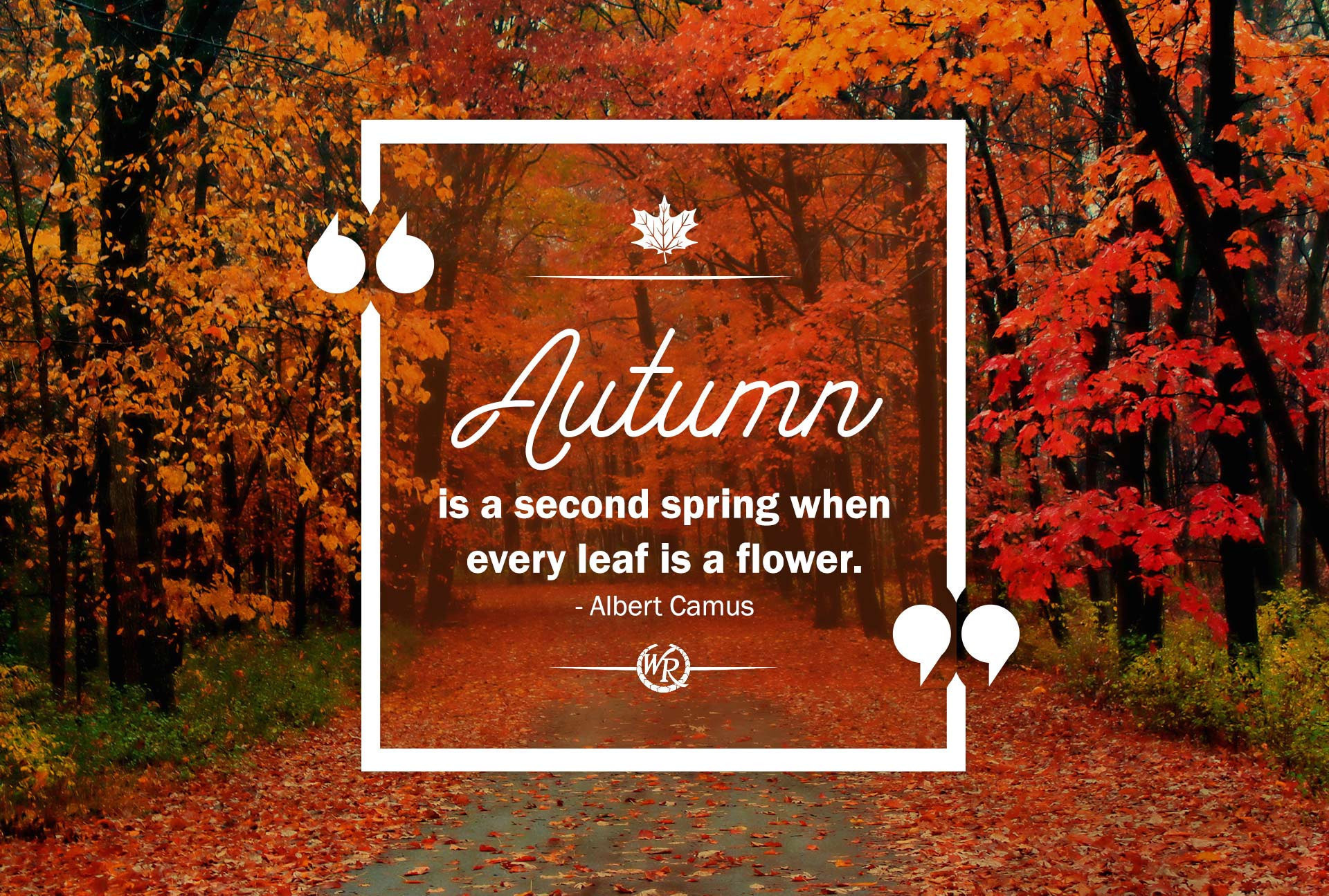 Autumn Is A Second Spring When Every Leaf Is A Flower | Albert Camus | Inspirational Travel Quotes