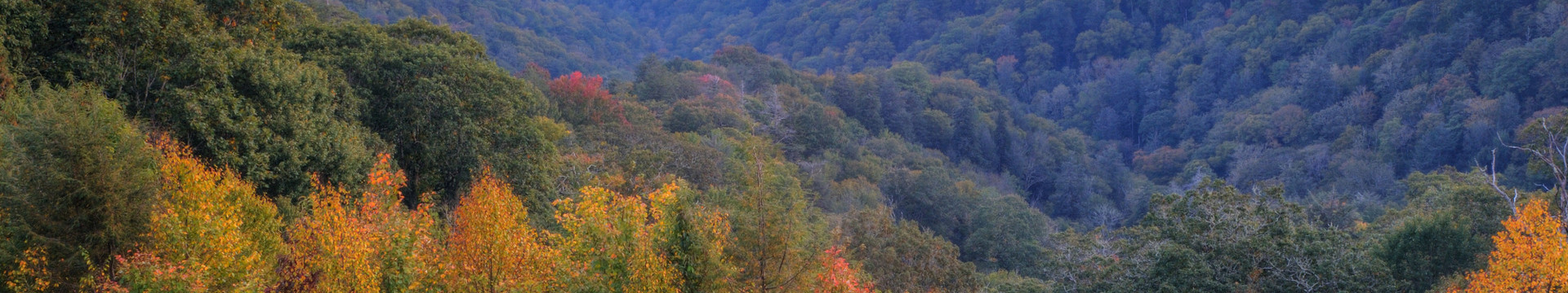 Gatlinburg Taste Of Autumn - fall in the Smokies