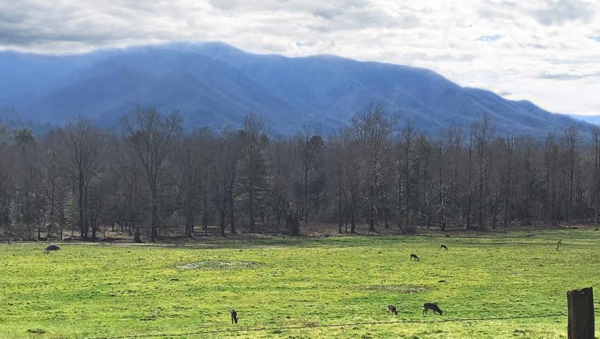 Gatlinburg Mountains - Westgate Smoky Mountain Resort
