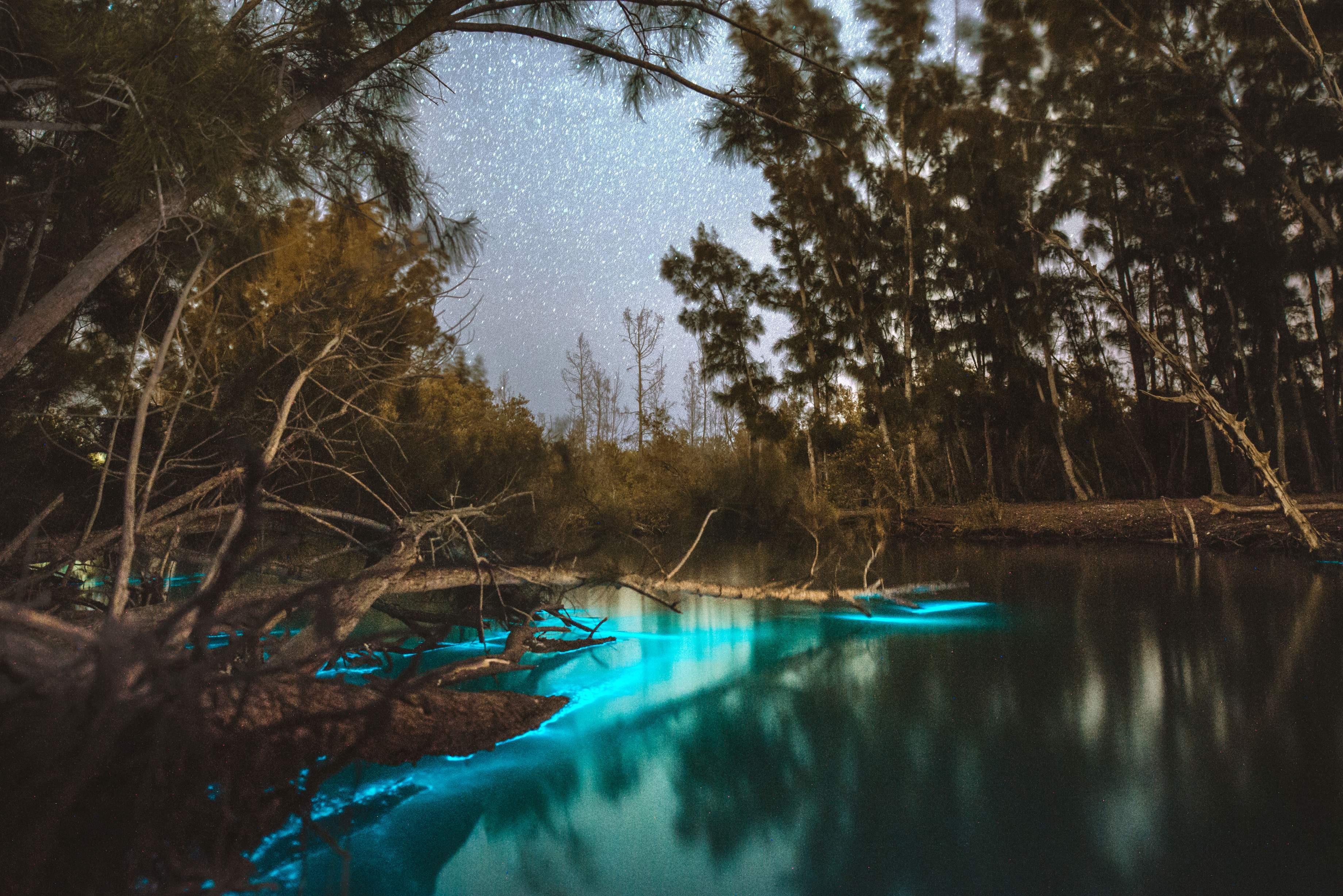Bio Tour - Best Places to Kayak in Florida