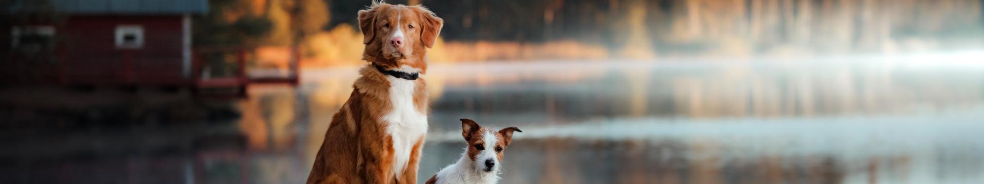 Dogs - River Terrace Resort
