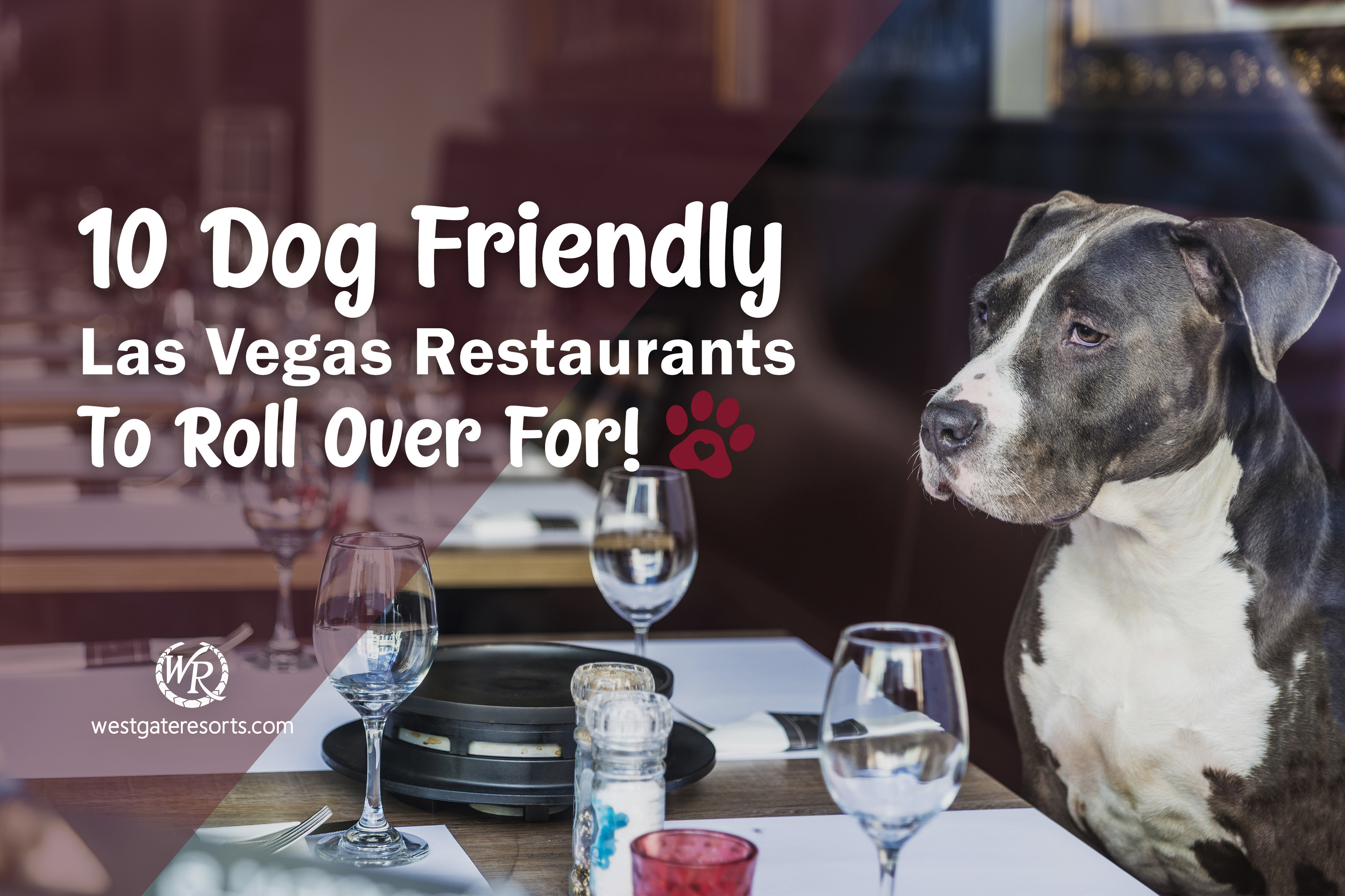 10 Dog Friendly Las Vegas Restaurants To Roll Over For!