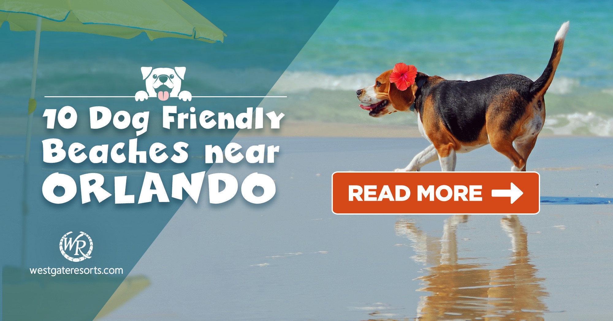 10 Dog Friendly Beaches Near Orlando