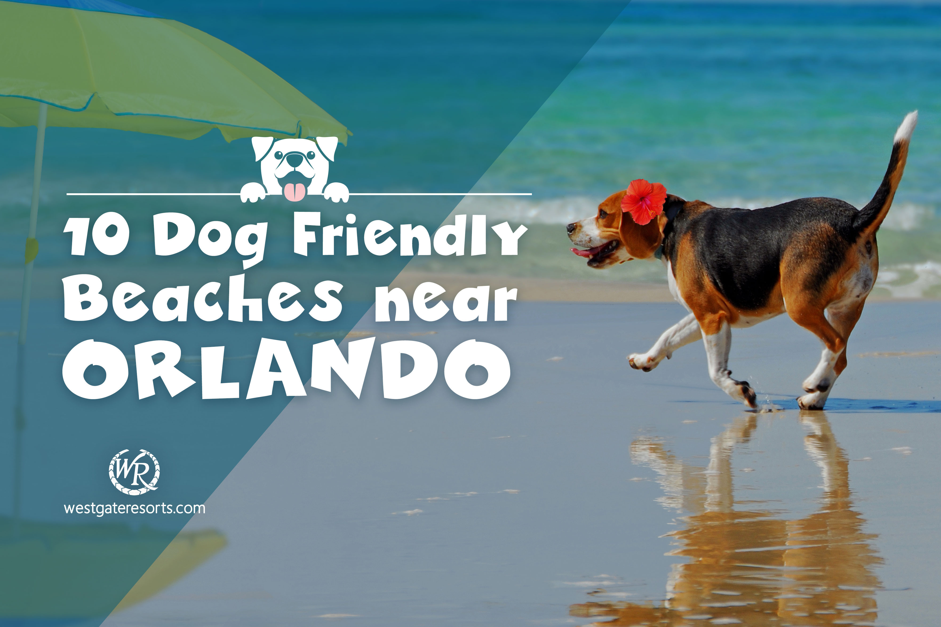 10 Dog Friendly Beaches Near Orlando