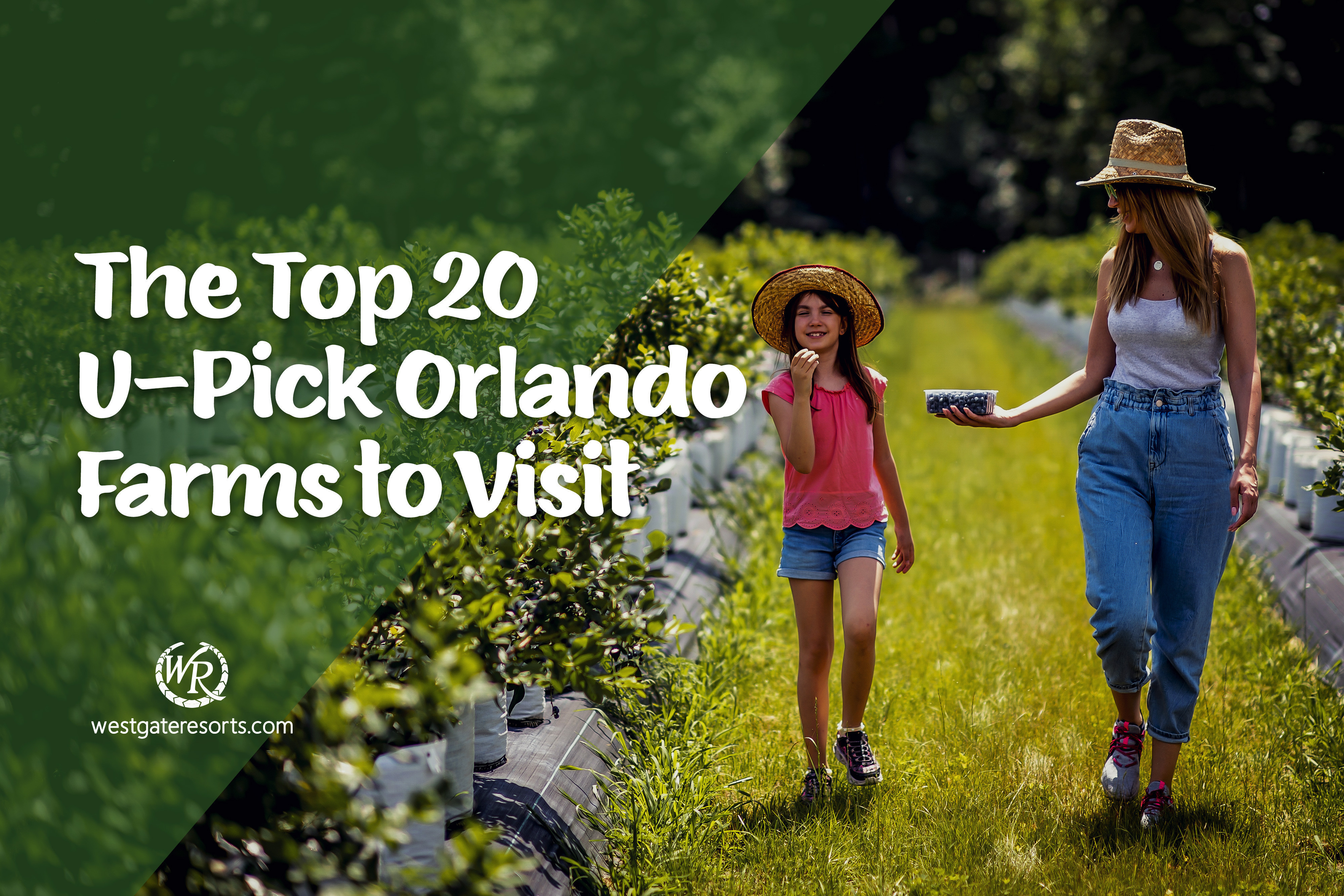 The Top 20 U Pick Orlando Farms to Visit